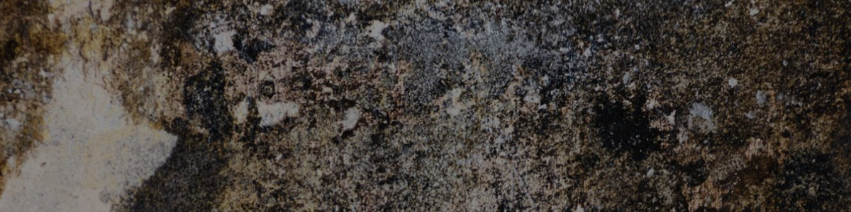 Chicago Mold Cleanup