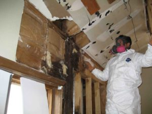 Black Mold Removal Chicago