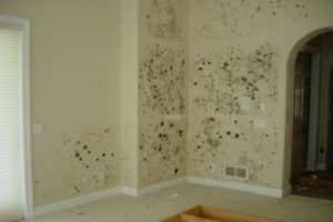 Professional Mold Removal Chicago