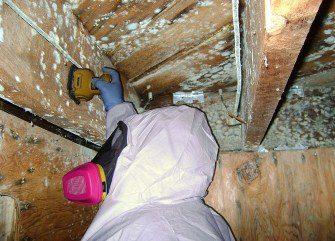 Mold & Mildew Remediation