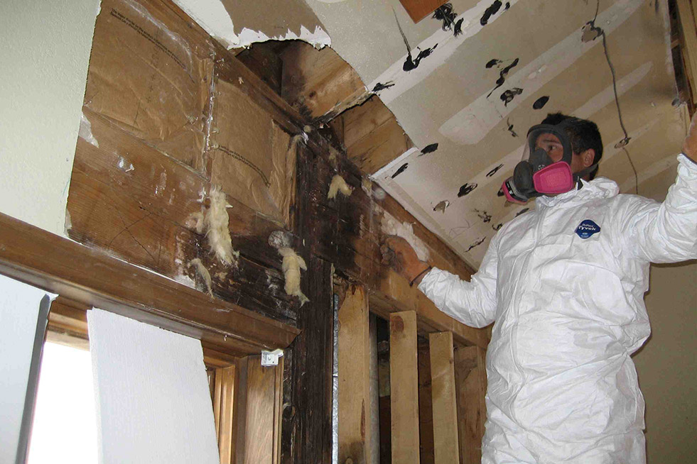 Oak Park Mold Removal and Schedule Your Mold Inspection