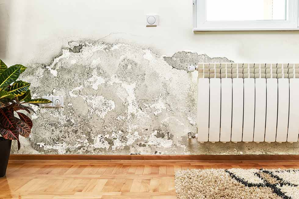 Mold & mildew damage on a wall in a home