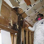 Mold Remediation
