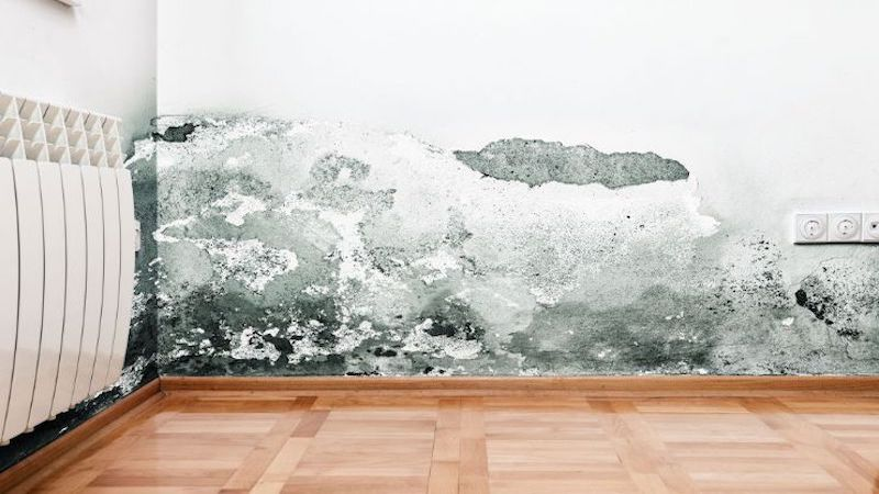 Mold Removal in Trout Valley, IL (2594)