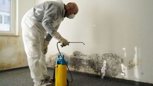 Naperville Water Damage Mold