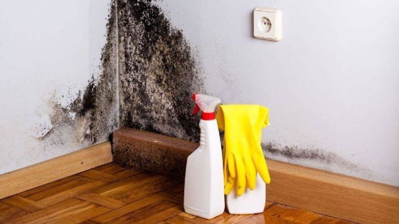 Mold Cleanup in Union, IL (5037)