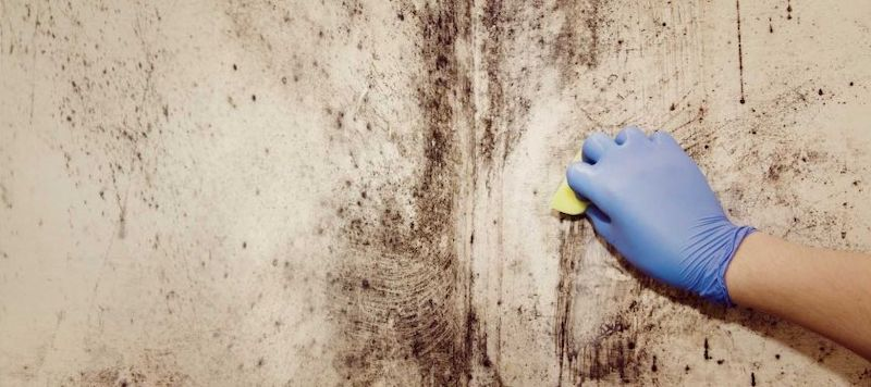 Professional Mold and Mildew Remediation Niles IL