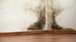 Water Damage Prevention in Oak Park