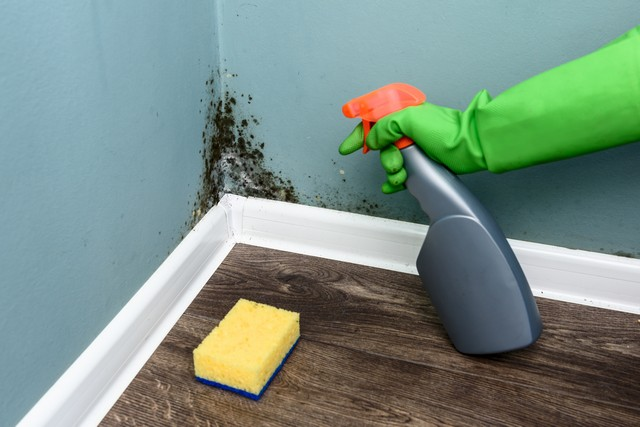 Cleaning Up Mold Is Not A DIY Job!