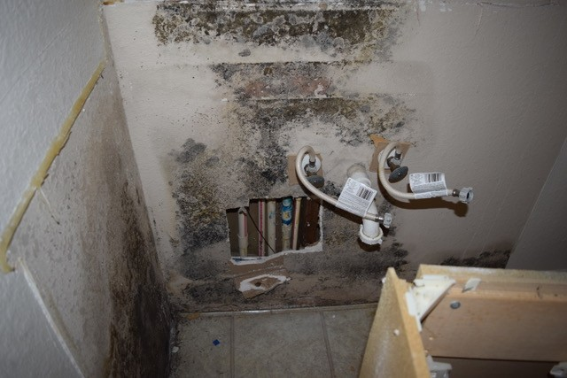 Some Key Facts On Mold!